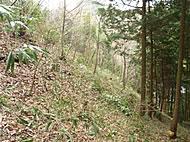 img_140321_Forest06.jpg